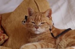 ols-cat