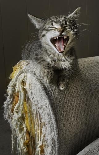 Как отучить кошку царапать мебель? – Вокруг кошки