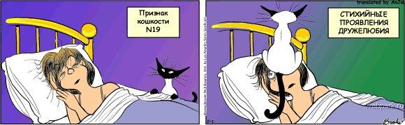 priznak_koshkosti_19