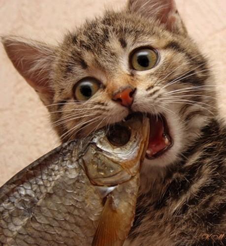 Кот ест только рыбу что делать
