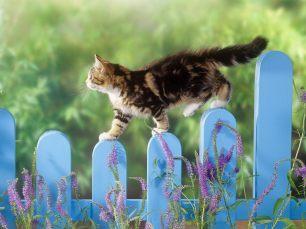 Cat_Who_Walks_Alone_-_Windows_7