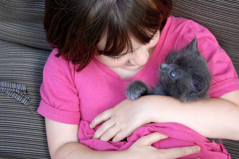 девочка-держит-на-руках-котенка