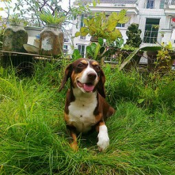 doghouse-blog8