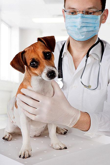 nonsurgical-neuter-vet-ex-dog-shutterstock_110687507