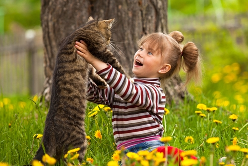 Tips-for-adopting-a-cat-when-you-have-kids_132_432969_0_14078676_500