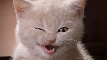 14312A-cat-seems-to-be-very-angry-or-be-afraid-of-something-wallpaper