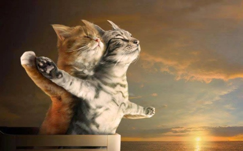 2-Kitty-Cats-in-Love-wallpaper