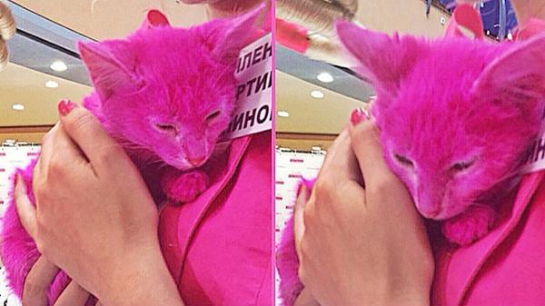 крашеный котёнок