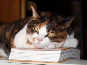 cat-on-book-632x475