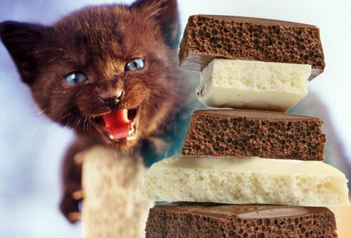 cat_chocolate