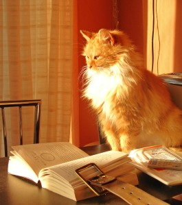 Cat_with_book_2320356657