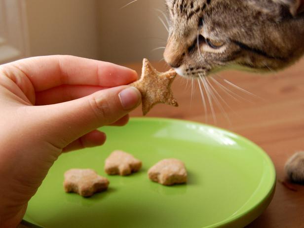 CI-AmyBites_Cat-Sniffing-Homemade-Treats_s4x3_lg