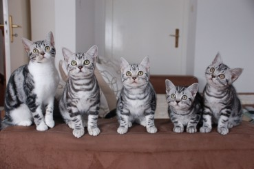 Couch Kitten