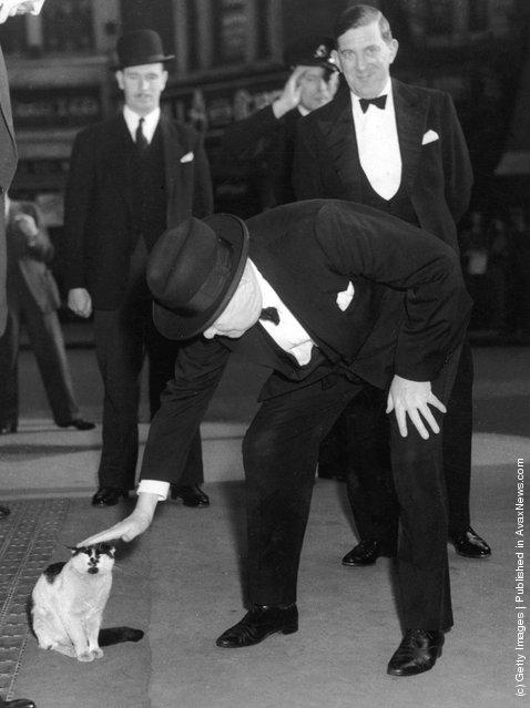 Уинстон Черчилль, любил кошек настолько, что завещал, чтобы после его смерти в резиденции всегда жили коты.