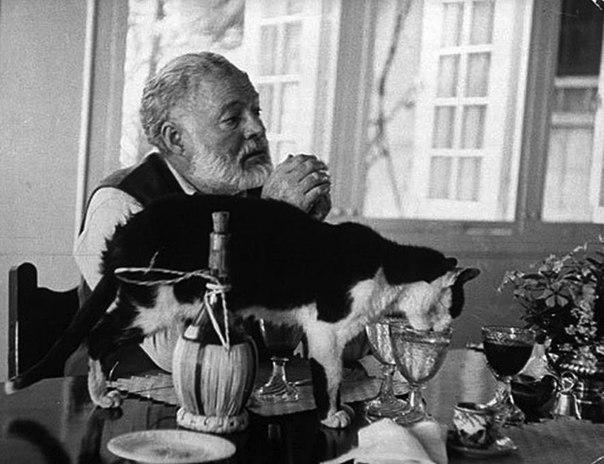 Эрнест Хемингуэй известен всем своей необычайно горячей любовью к кошкам.