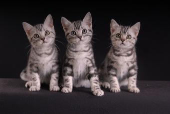 HansonPalace Kitten