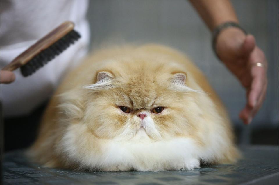 У кота ввалился бок