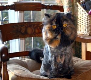 Lion_cut_tortoiseshell_Persian