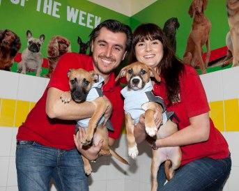 Maxi Zoo Dogs Trust