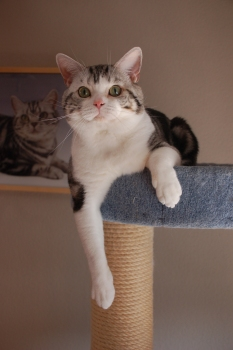 Thor_cattree
