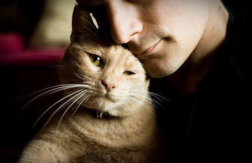 Мужчина любят котов