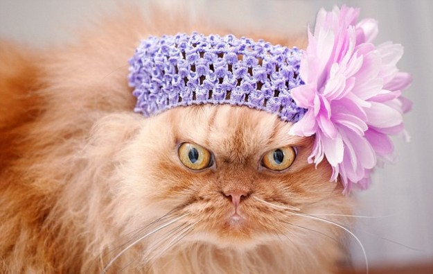 1412610329156_wps_2_Persian_cat_with_flower_h