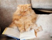 1412622910180_wps_25_Persian_cat_with_book