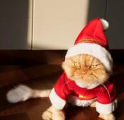 1412622969369_wps_26_Persian_cat_in_santa_clau