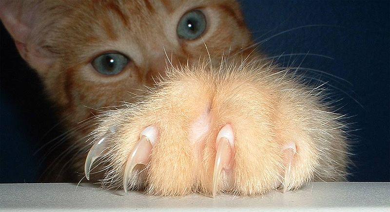 Животное которое царапает своими руками