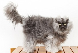 Полковник Meow