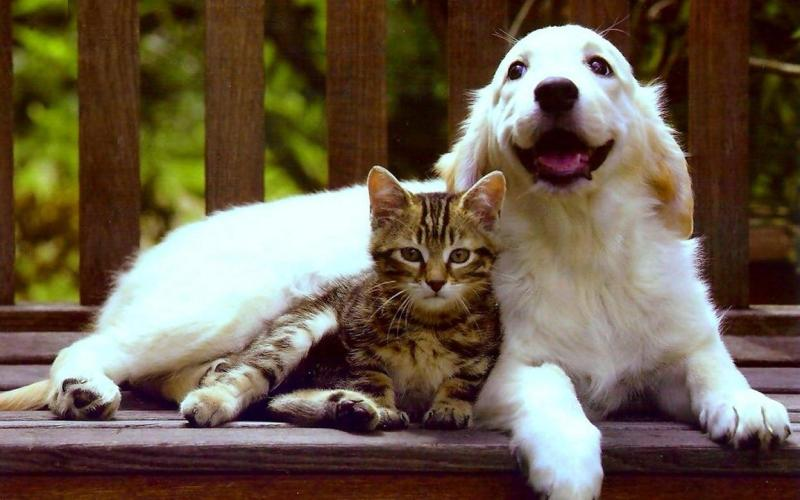cute_friends_cat_puppy_dog_love_kitten_hd-wallpaper-1694064
