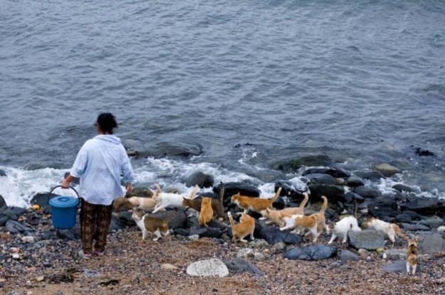 День защиты животных