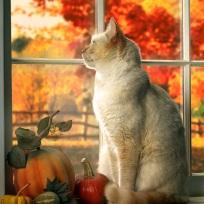 Кошка_2