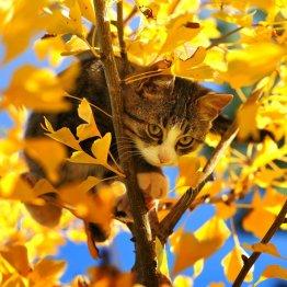 Кошка_5