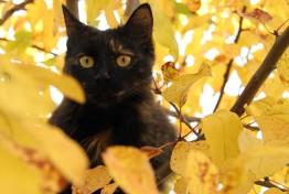 Кошка_8