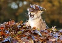 Львёнок в листьях_1