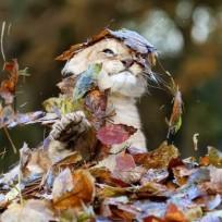 Львёнок в листьях_2
