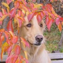 Собака_2