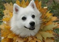 Собака_3