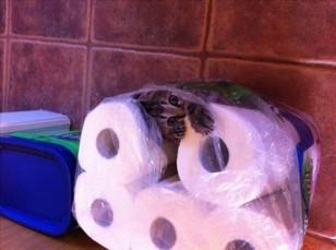 Не знаю, зачем вам нужны эти мягкие рулончики, а мне для сна — в самый раз.