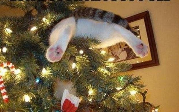 Спрятали подарки на самом верху, думали, я не найду? Ну, конечно!