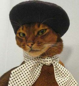 designer-etsy-cat-clothes - копия
