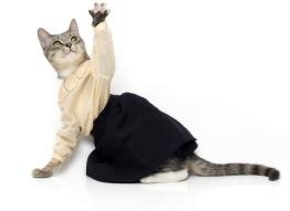 noah-sheldon-cats-wearing-clothes-4 - копия