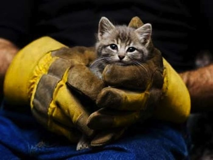 1320001520_heartwarming_photos_of_animals_being_rescued_14