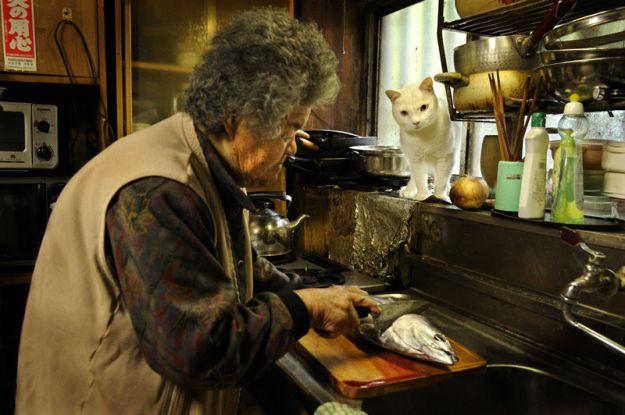 14-бабушка и кот - фотоистория  Миёко Ихара