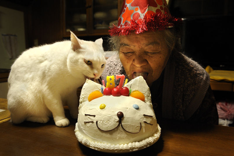 26-бабушка и кот - фотоистория  Миёко Ихара