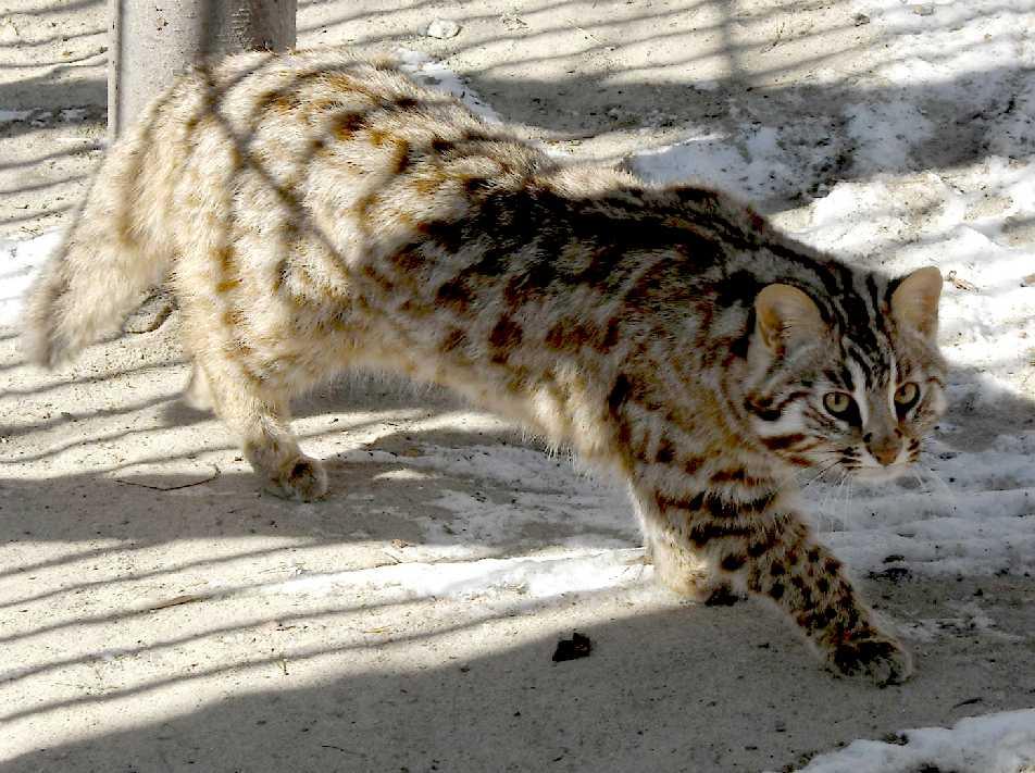 Кот в приморском крае
