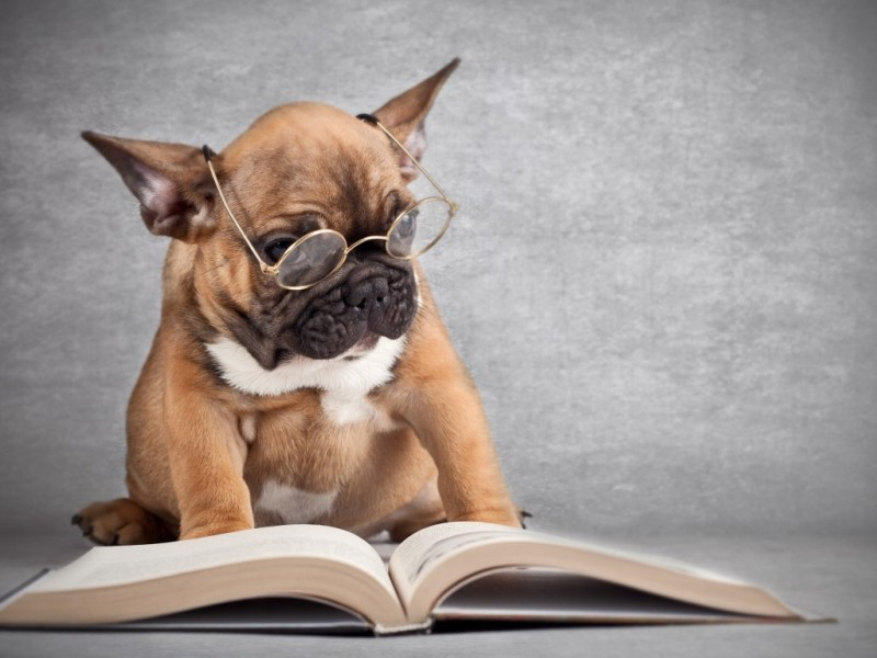 Animals___Dogs_Dog_reading_a_book_042363_