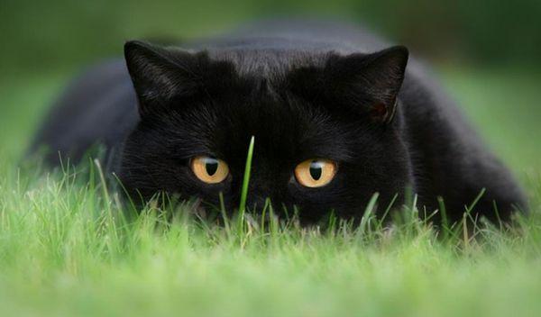 Картинки по запросу кот на охоте