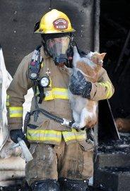 cat-fireman (1)